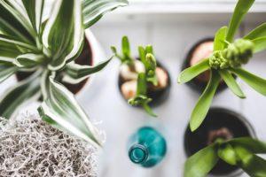 観葉植物 育て方