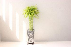 新居祝い 観葉植物