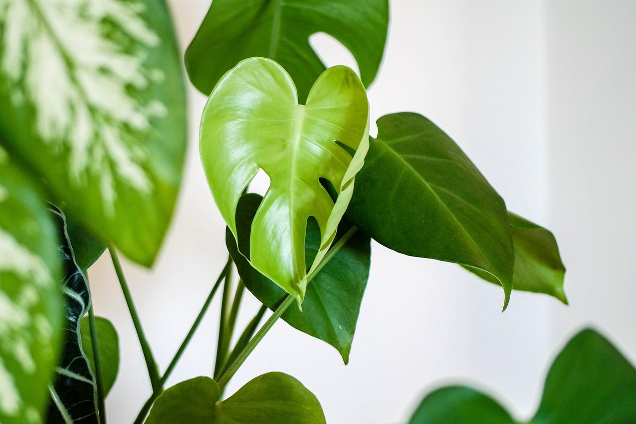 観葉植物運気アップ